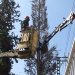 גיזום עצים לאורך רשתות חשמל