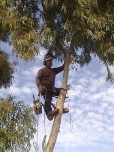 חשיבות-גיזום-עצים