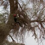 גיזום עצים - פתרונות גיזום