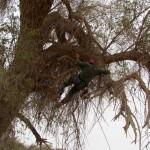 גיזום עצים - מעוז גיזום