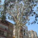 טיפוח עצים ונוף - מעוז גיזום