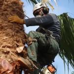 גיזום עצים - אמצעי בטיחות