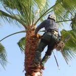 עידוד צמיחה בריאה של העץ